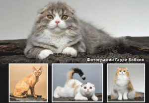 תערוכת חתולים באשדוד בישראל